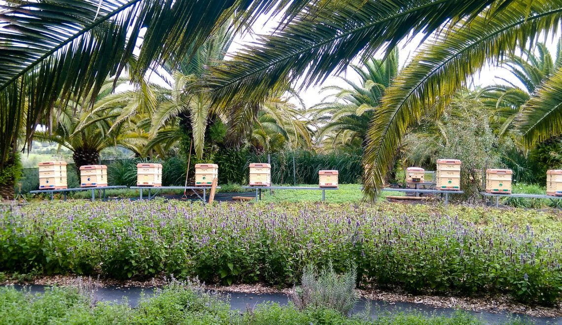 Bee hives in an apiary belonging to female beekeeper Gabrielle Morley