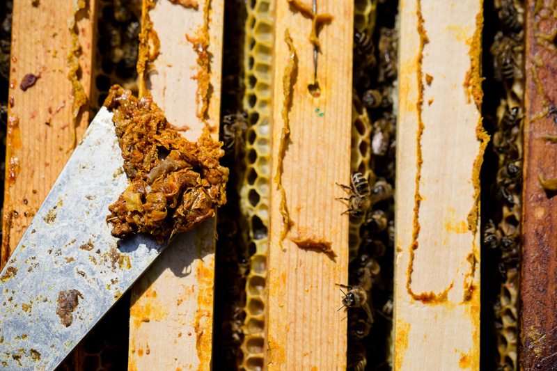 scraper with propolis on it by a bee hive