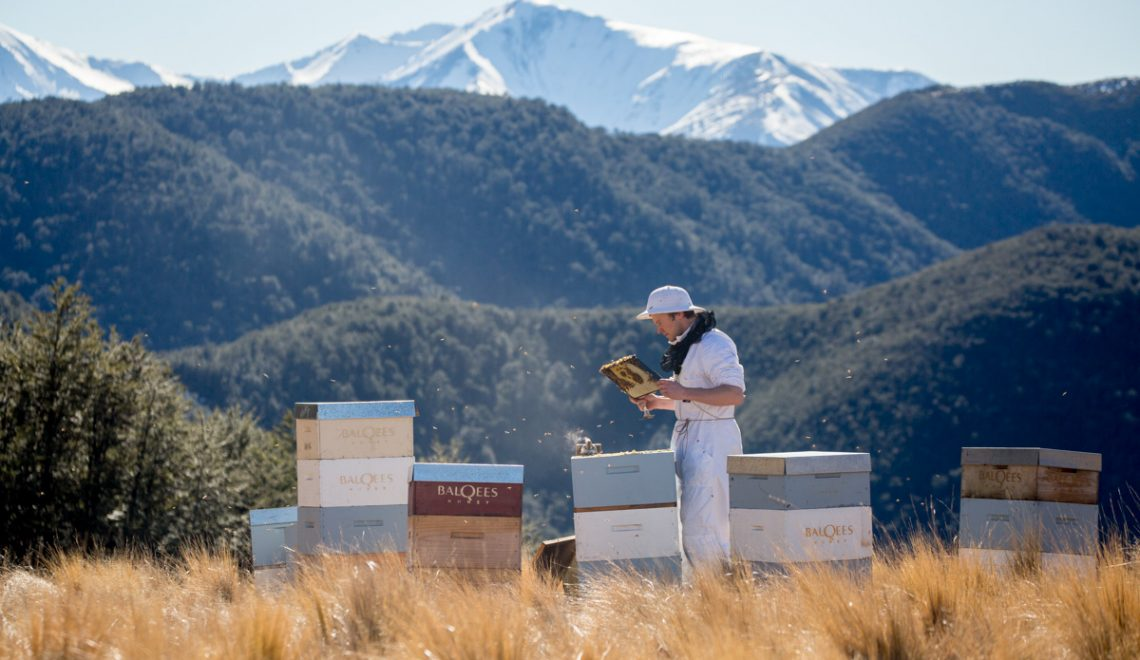 beekeeper and hives in front of mountains